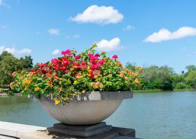 park-lagoon-flowers